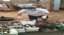 Mutirão retira cerca de cinco toneladas de possíveis criadouros do mosquito Aedes Aegypti